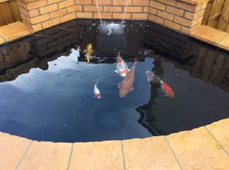 Your ponds for Koi pool lancashire